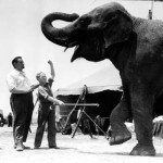 "From Nancy Draper, daughter of Rufus Harrington: This photo looks to be of a very young Jackie Cooper learning how to ""train"" quite a large elephant! Bill & Madelyn Hann were kind enough to present it to the ARC on Nancy's behalf."