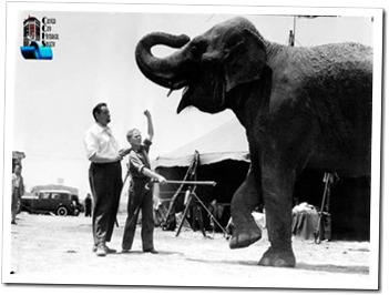 "From Nancy Draper, daughter of Rufus Harrington: This photo looks to be of a young Jackie Cooper learning how to ""train"" a large elephant. Bill & Madelyn Hann were kind enough to present it to the ARC on Nancy's behalf. - Culver City Historical Society"